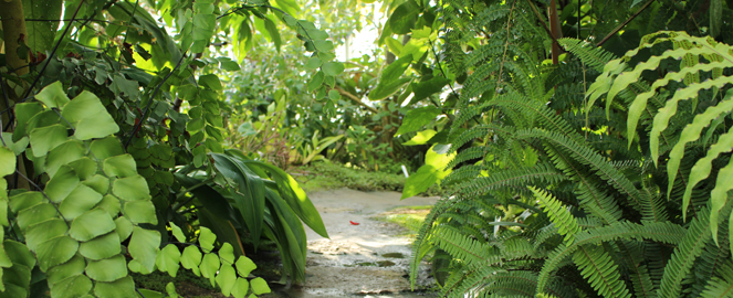 væksthuset århus botanisk have
